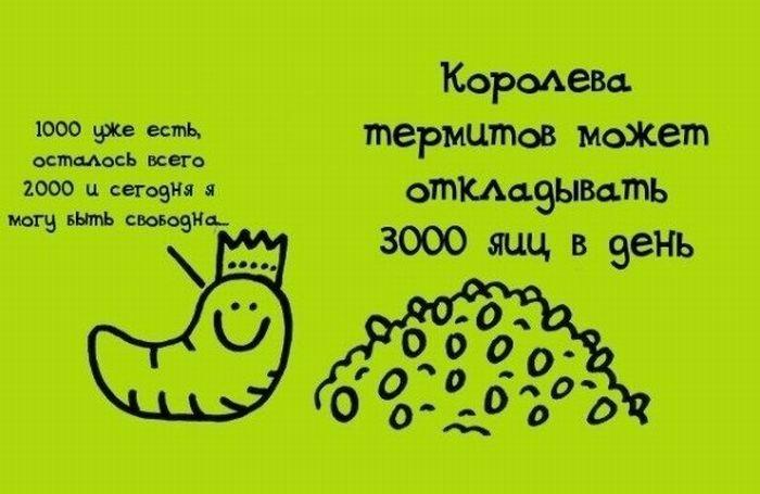 fakti_v_kartinkah_25 (700x455, 40Kb)