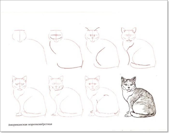 cat00007 (700x551, 117Kb)