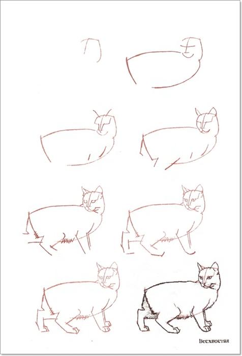 cat00013 (476x700, 99Kb)