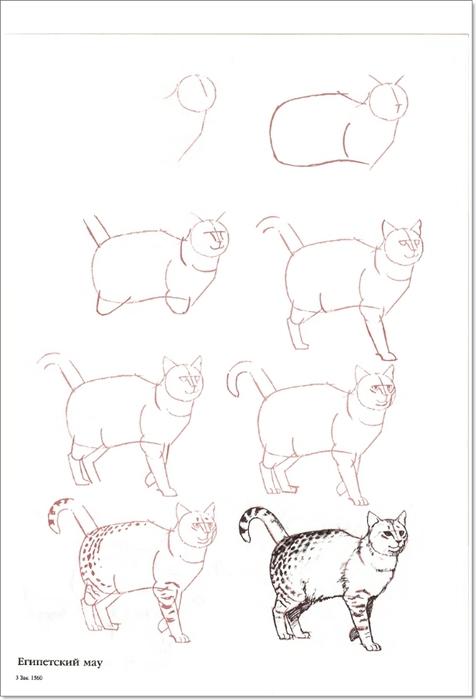 cat00014 (476x700, 110Kb)