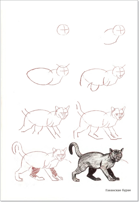 cat00017 (481x700, 104Kb)