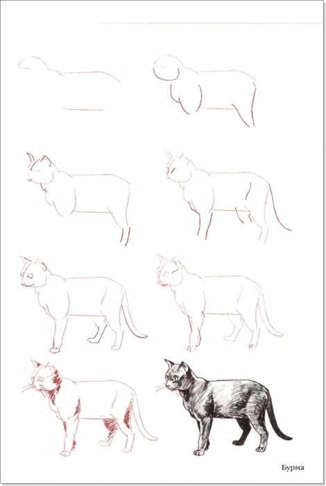 cat00019 (470x700, 101Kb)