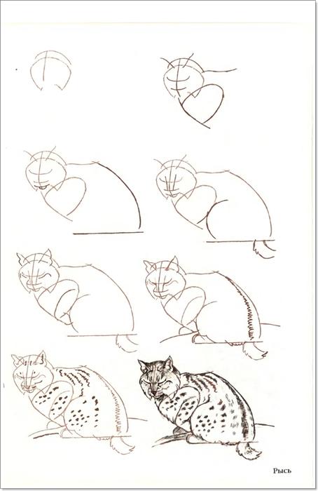 cat00031 (454x700, 124Kb)