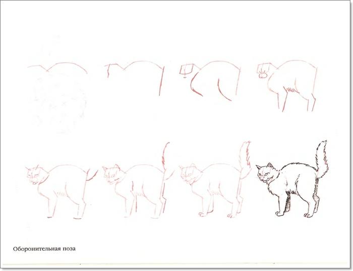 cat00047 (700x538, 85Kb)