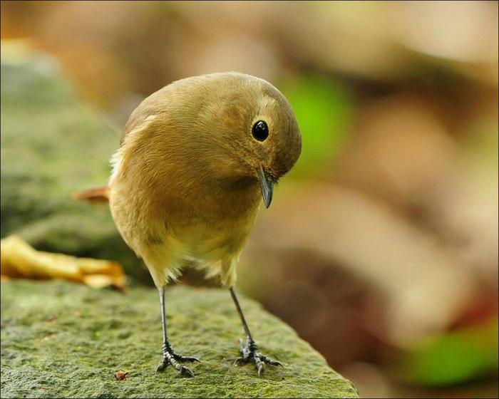 birds-19 (700x560, 43Kb)