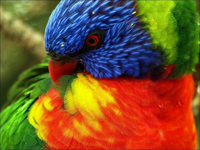 birds-41 (700x525, 65Kb)