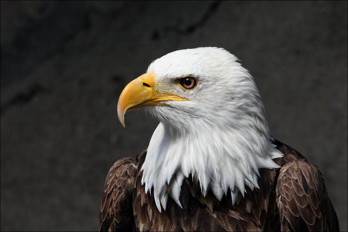 birds-47 (700x467, 32Kb)
