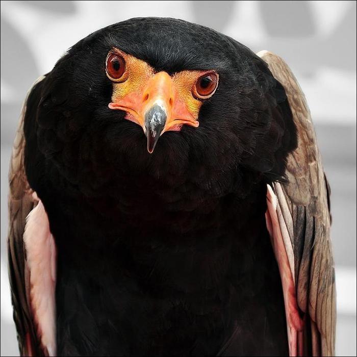 birds-120 (700x700, 56Kb)
