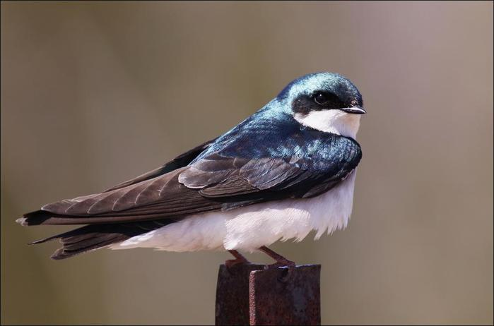 birds-130 (700x462, 26Kb)
