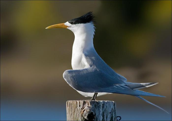 birds-137 (700x494, 26Kb)