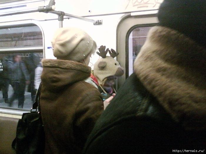 шапка лося