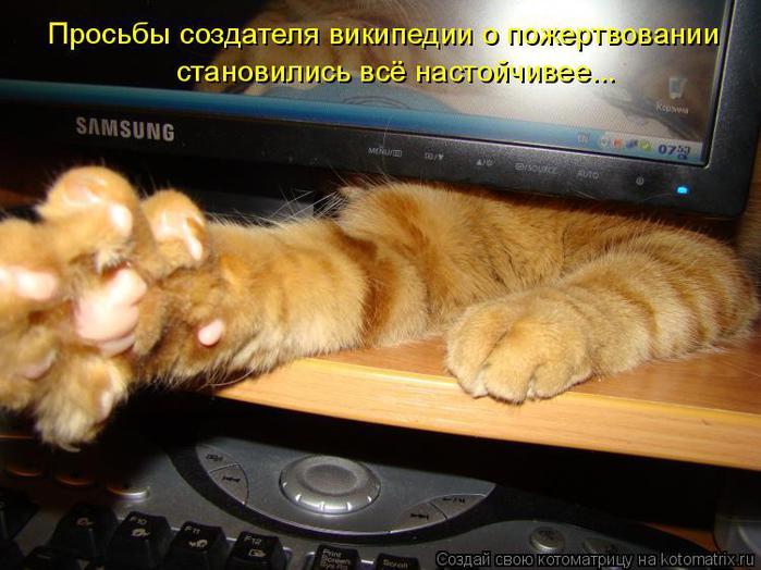 Котоматрица прикольные фото котов 4 (700x524, 56Kb)