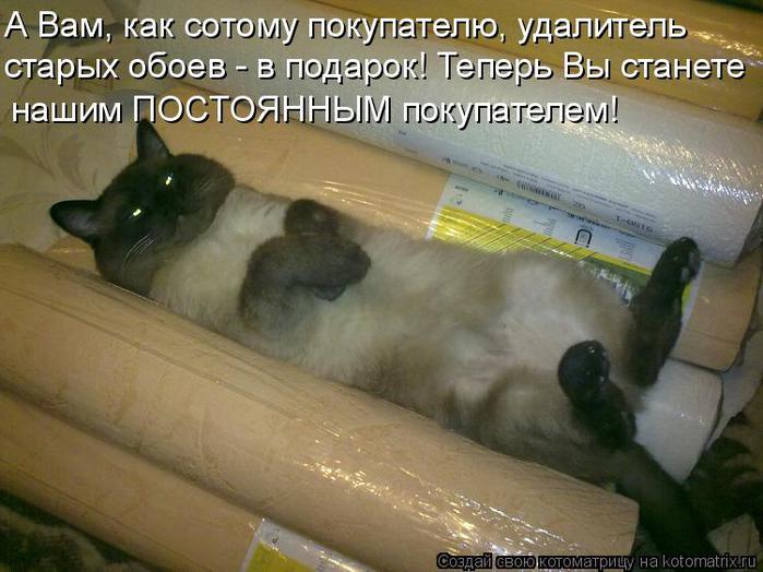 Котоматрица прикольные фото котов 10 (700x524, 57Kb)