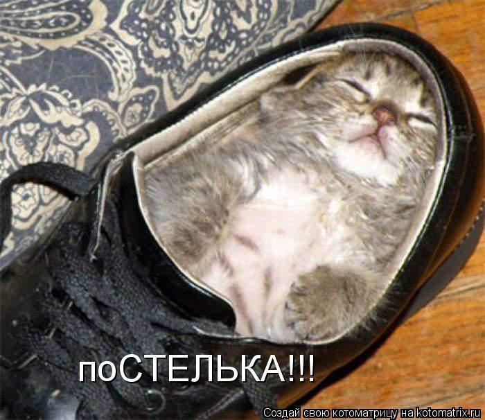 Котоматрица прикольные фото котов 16 (700x606, 74Kb)