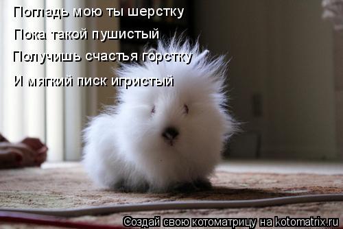 Котоматрица прикольные фото котов 21 (500x334, 28Kb)