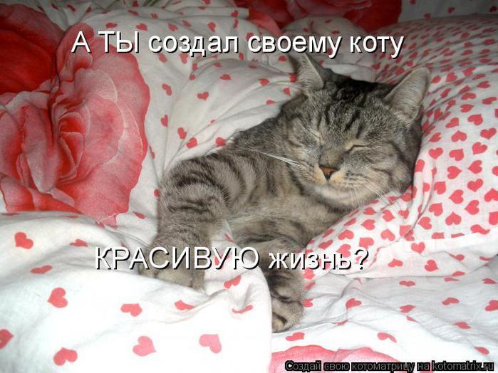 Котоматрица прикольные фото котов 23 (700x524, 65Kb)
