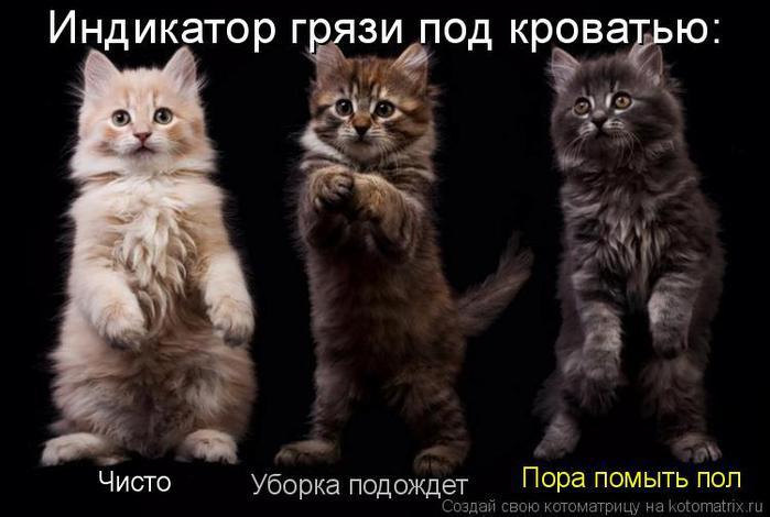 Котоматрица прикольные фото котов 25 (700x470, 42Kb)