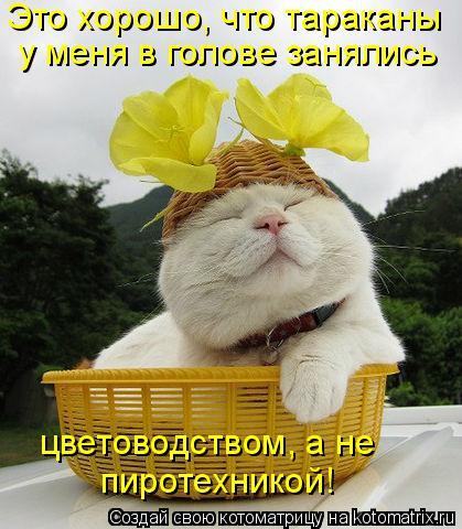 Котоматрица прикольные фото котов 29 (419x480, 47Kb)