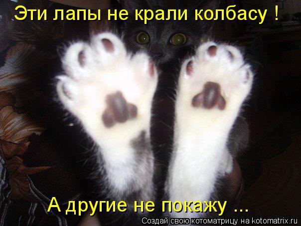 Котоматрица прикольные фото котов 32 (604x453, 44Kb)