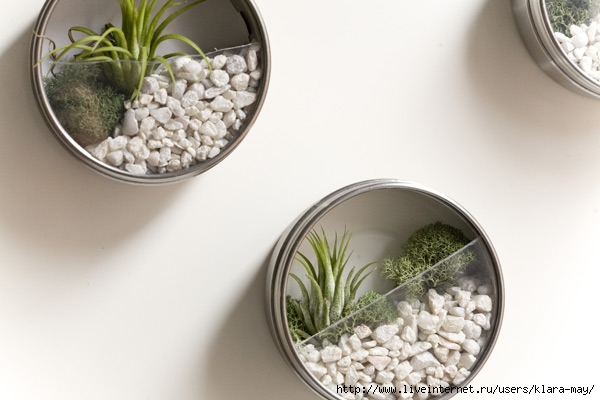 diy-vertical-terrarium-wedding-favors-01 (600x400, 117Kb)