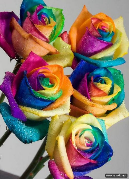 Rainbow_Flowers_003 (503x700, 69Kb)