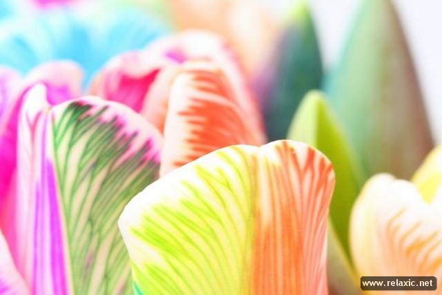 Rainbow_Flowers_006 (640x427, 40Kb)