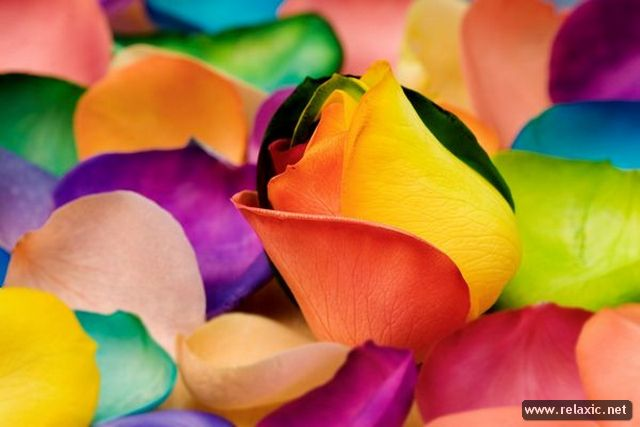 Rainbow_Flowers_009 (640x427, 33Kb)