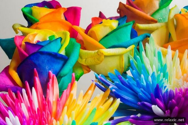 Rainbow_Flowers_014 (640x427, 56Kb)