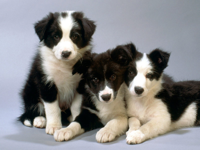 Dogs-dogs-16697072-1600-1200 (700x525, 317Kb)