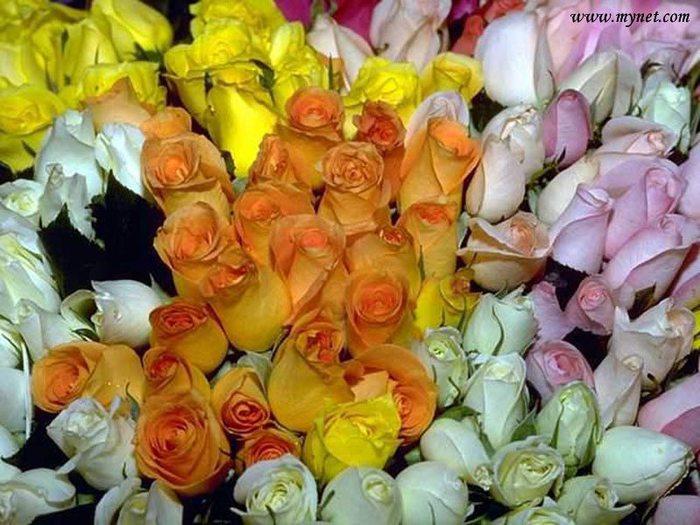 flower5800x600cm7 (700x525, 85Kb)