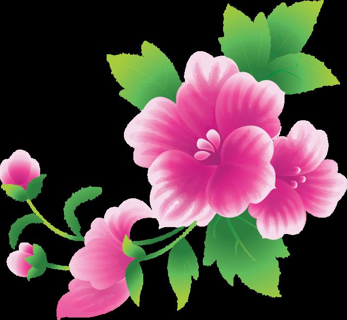 Картинки пнг цветы 6