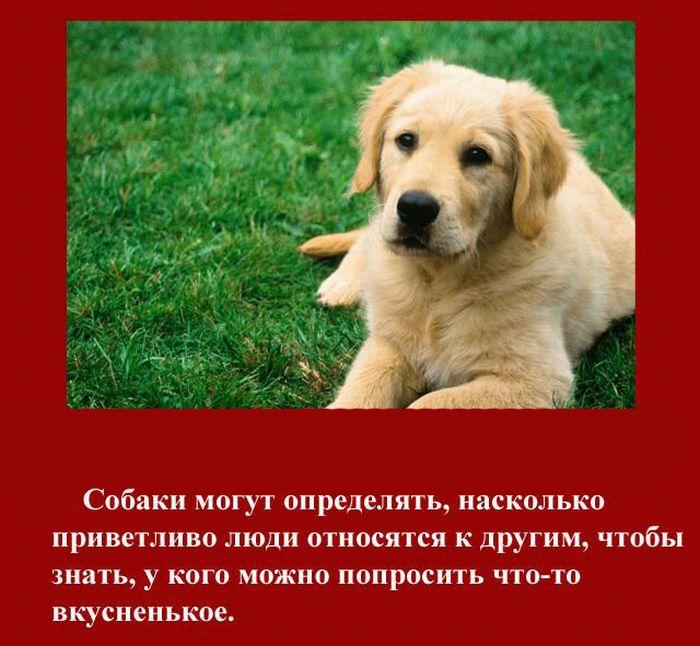 fakti_2011_01 (700x646, 94Kb)