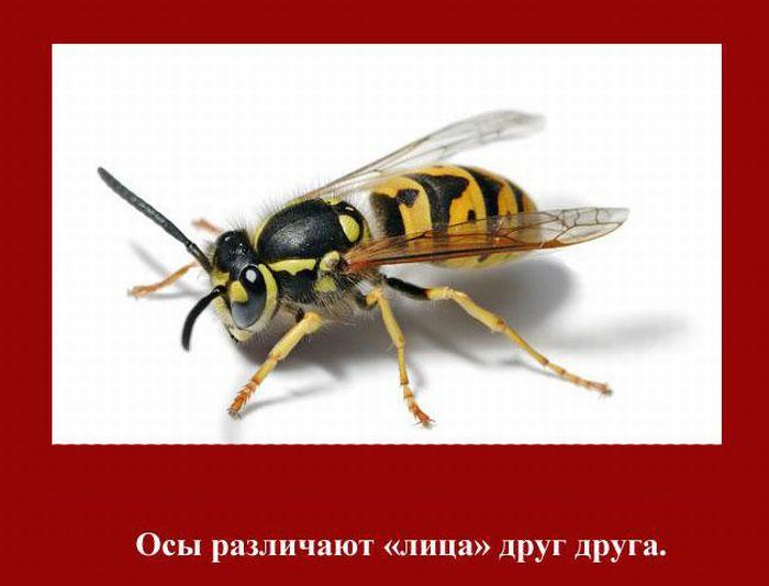 fakti_2011_06 (700x533, 51Kb)