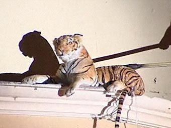 Плюшевый тигр (340x255, 16Kb)