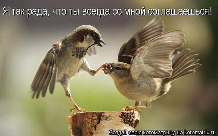 kotomatrix_23 (700x438, 46Kb)