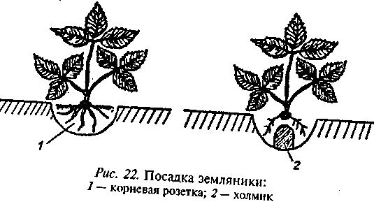 image011 (535x292, 5Kb)