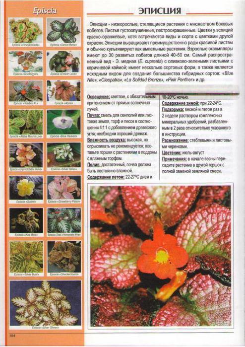 gryunvald_v_populyarnye_komnatnye_rasteniya_195 (494x700, 88Kb)