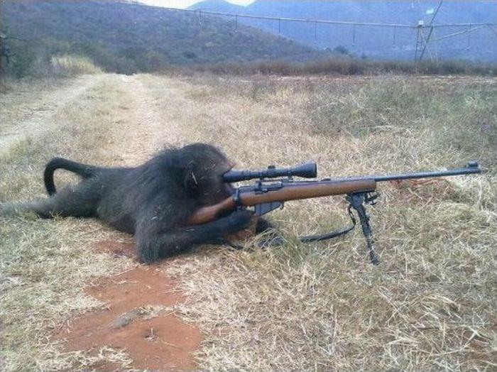 primates_21 (700x524, 83Kb)