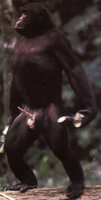 primates_27 (356x700, 32Kb)
