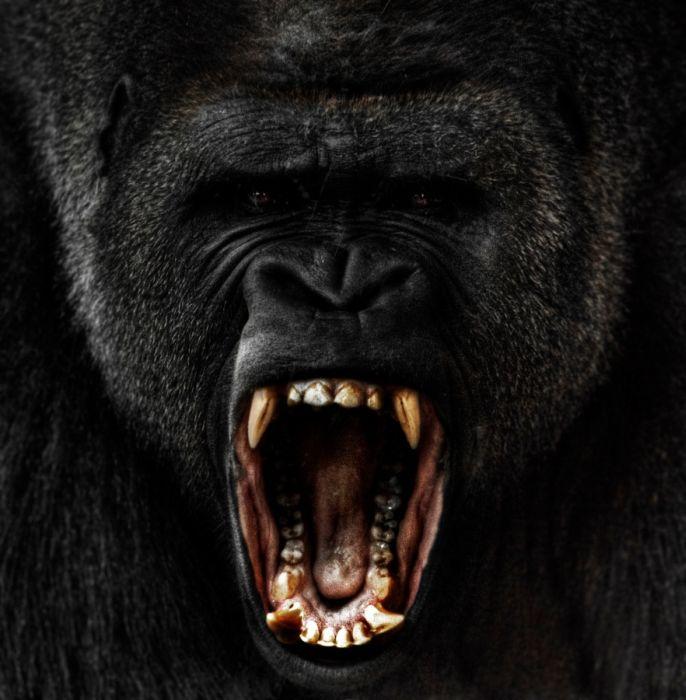 primates_30 (686x700, 64Kb)