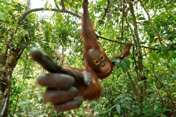 primates_35 (700x466, 88Kb)