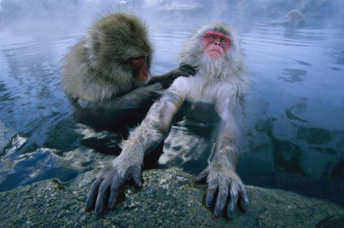 primates_41 (700x465, 51Kb)