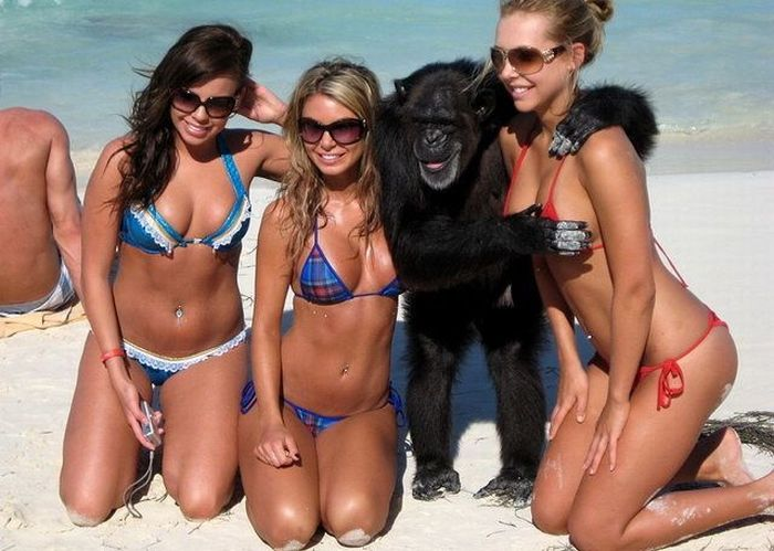 primates_52 (700x499, 65Kb)