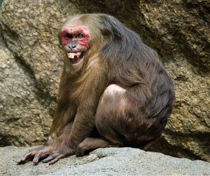 primates_59 (700x589, 94Kb)