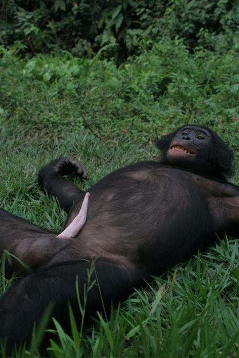 primates_76 (467x700, 57Kb)