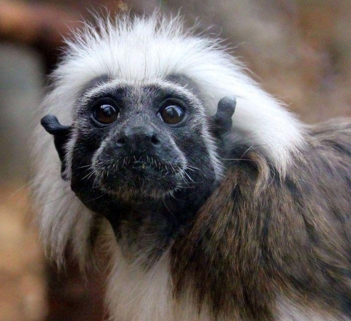 primates_86 (700x640, 68Kb)