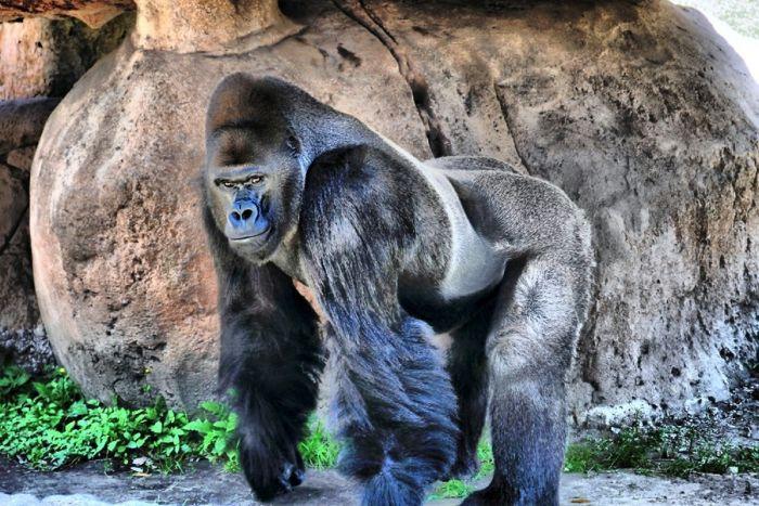 primates_90 (700x467, 95Kb)