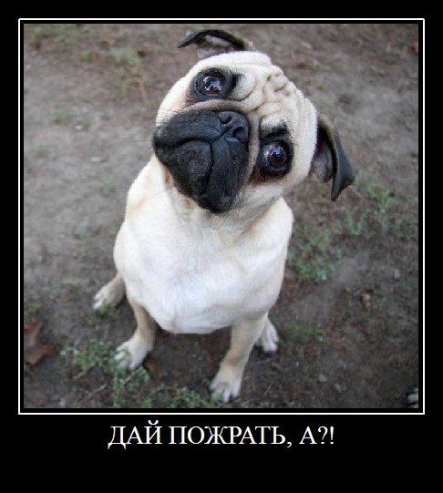 Смешные демотиваторы животных 17 new