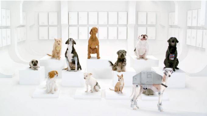 смешные собаки /1327349582_zvezdnuye_voynuy (680x382, 140Kb)