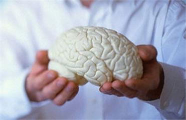 мозг (371x240, 56Kb)